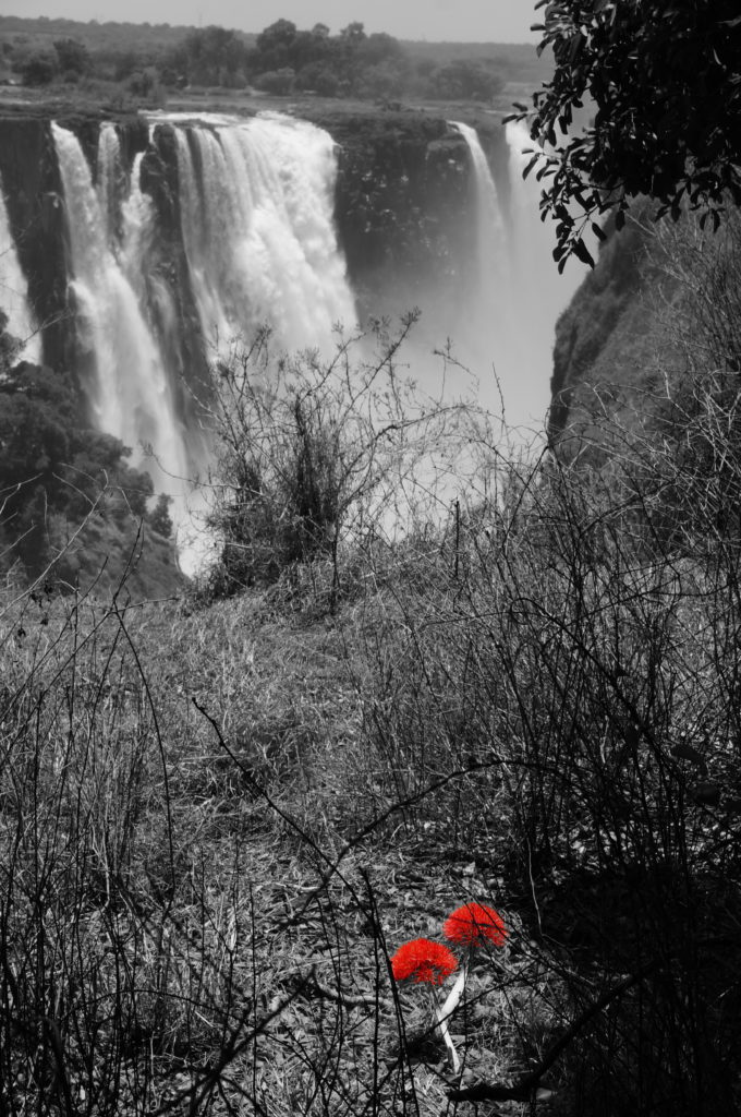 Feuerball Lilie Victoria Falls