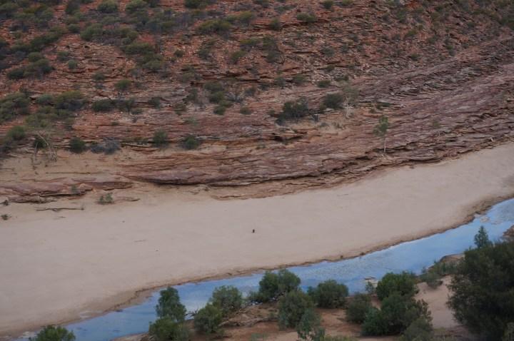 Känguru Kalbarri Canyon