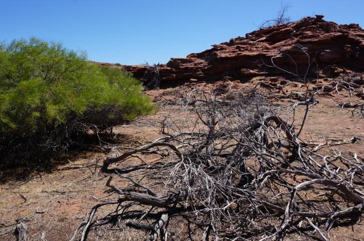 Outback Australia West