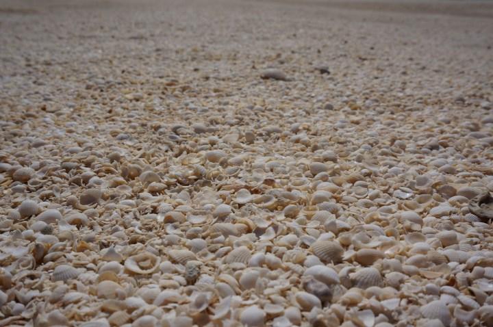 Muscheln Westaustralien