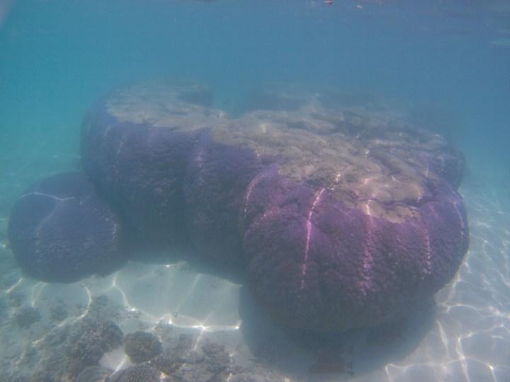 Ningaloo Reef Schnorcheln