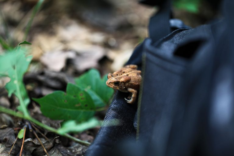 Backpacking Toad