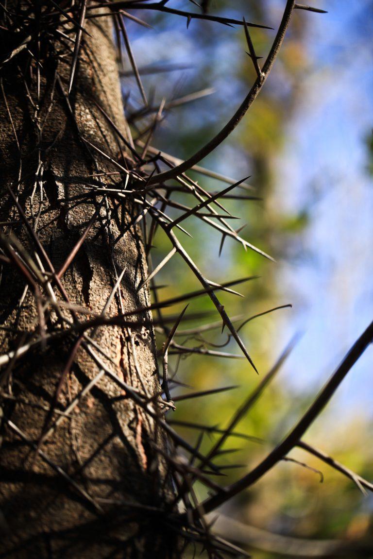 Arboreal Thorns
