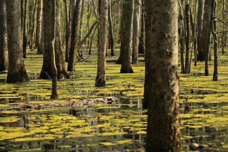 Swamplands