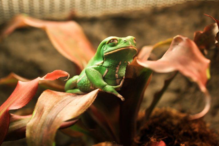 Monkey Frog Pt. 2