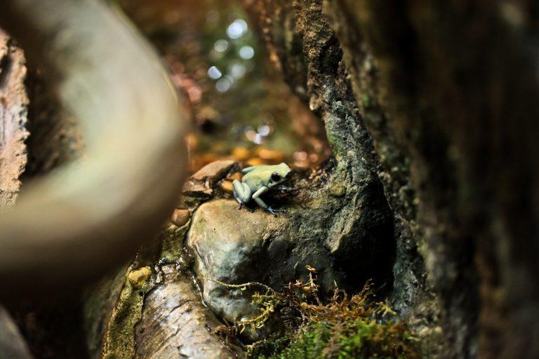Poison Dart Frog Pt. 1