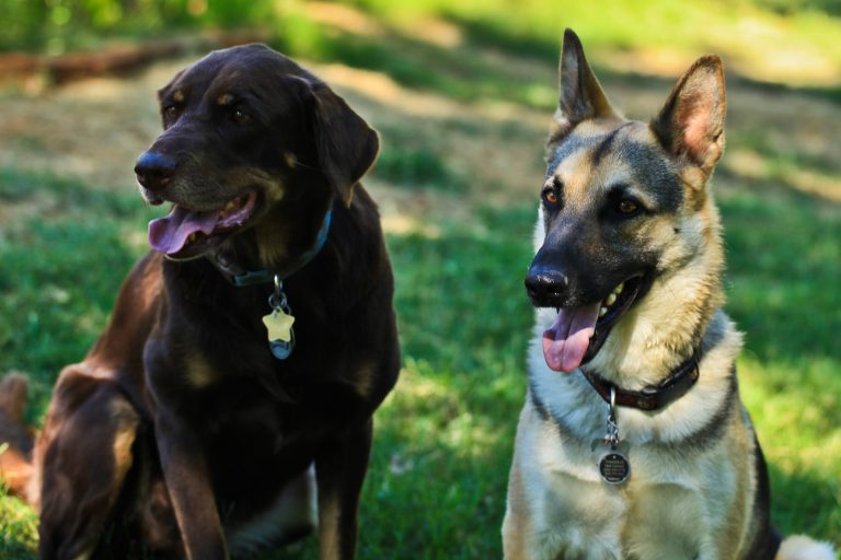 Dog Portraits. Dogtraits?