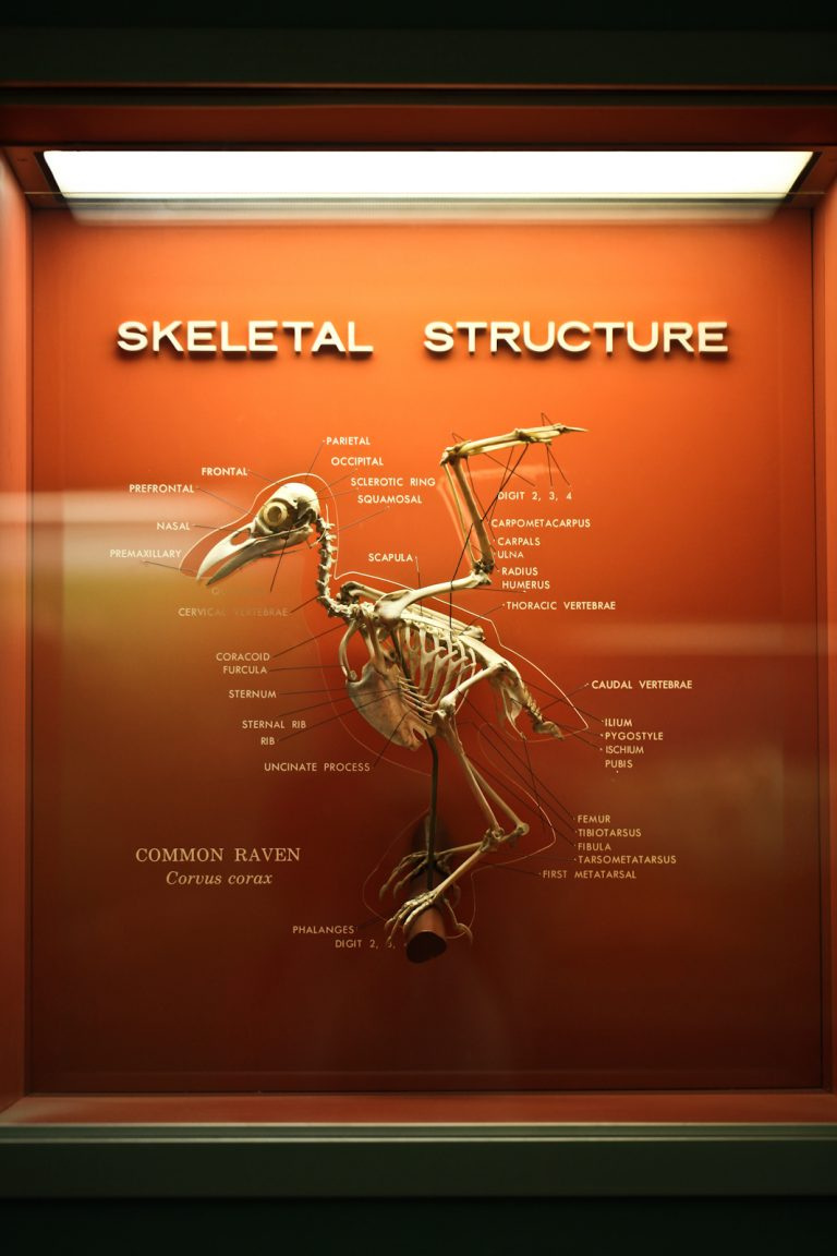 Skeletal Structure