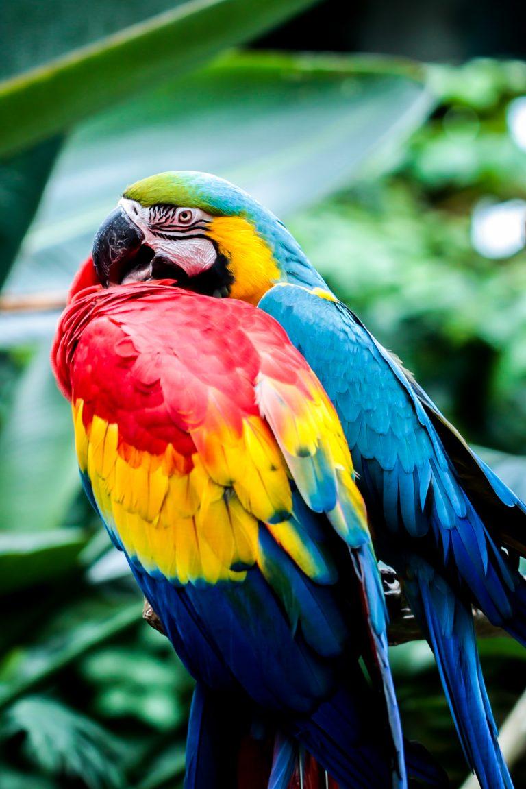 Macaw Love Pt.2