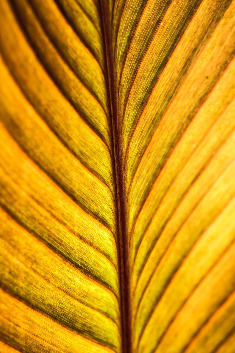 Sunsoaked Leaf