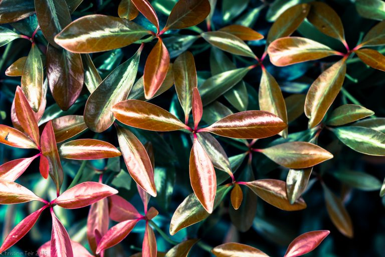 Multicolor Foliage