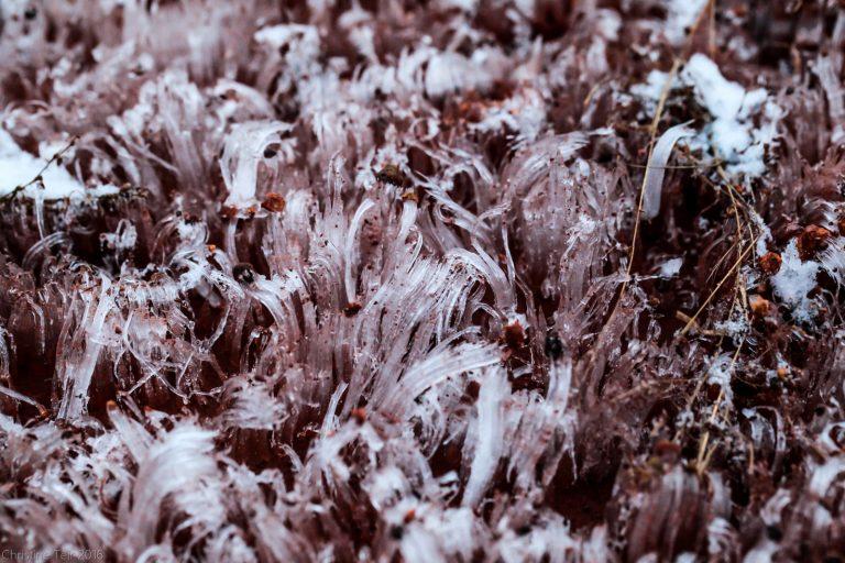 Frost Flowers II