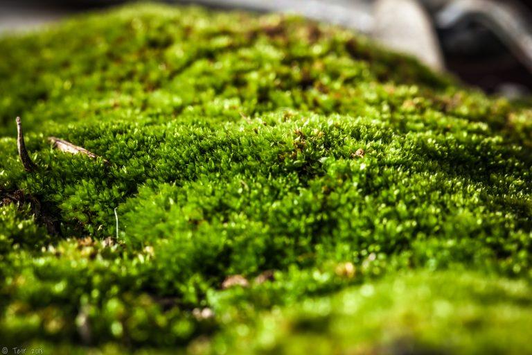 Moss is the best carpet.