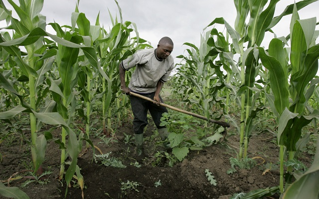 Does Agriculture Really Mean Peace in Nigeria? - Tekedia