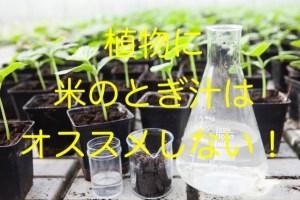 家庭の植物に米のとぎ汁はやめとけ