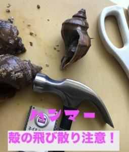 ハンマーでつぶ貝の殻を叩き割る