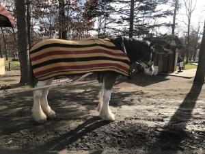 ノーザンホースパークの馬車馬