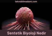 Sentetik Biyoloji Nedir