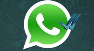 whatsapp logo, blue check vector