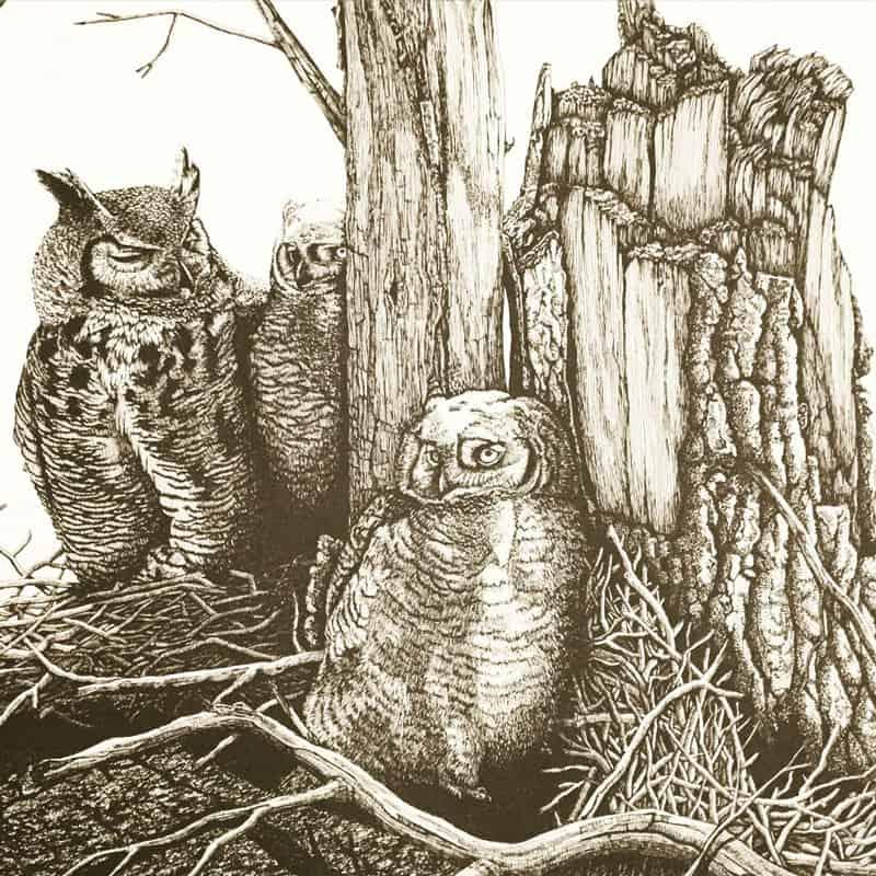 illo-owls-800