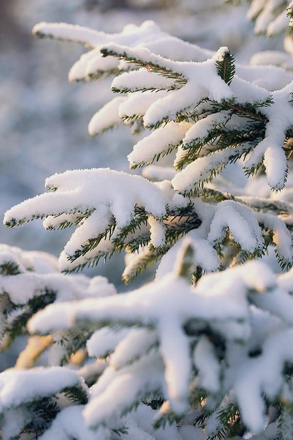 151228_hus30_vinter_landskap_snow_fujifilm_xt1_14mm_90mm_DSCF3368