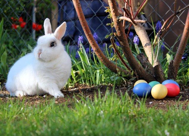 Påskedikt – 21 flotte og humoristiske dikt om påske