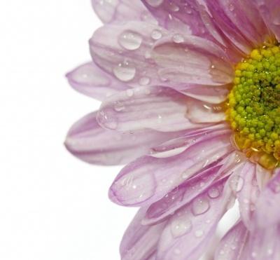 Takkekort begravelse – Find en god tekst til din takkekort