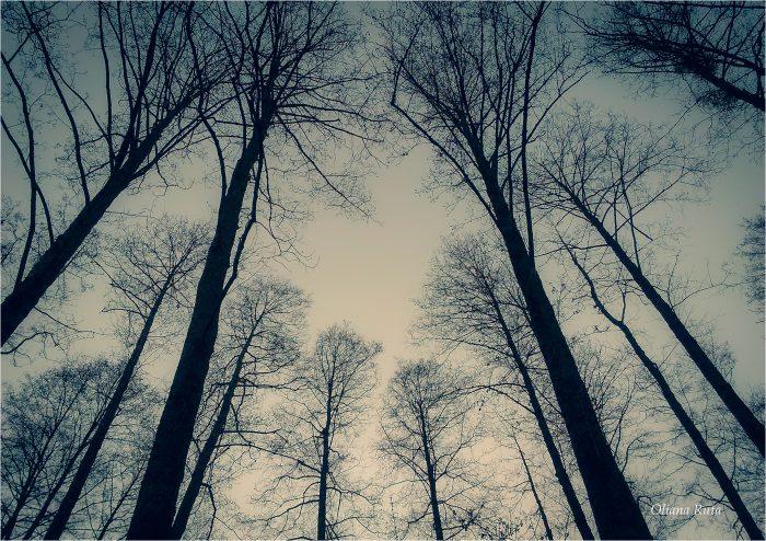 дерева на тлі сірого неба