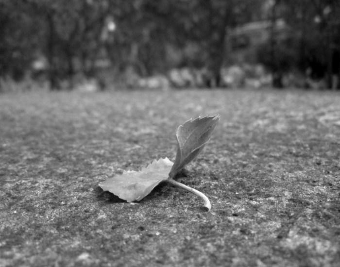 Осінній листок