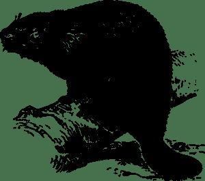 beaver-147073_960_720