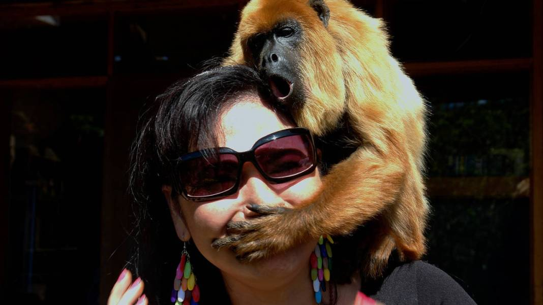 Persona con un Simio en la cabeza