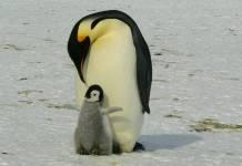 selfie-pinguinos