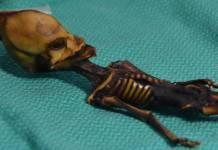 ata-extraterrestre-humana