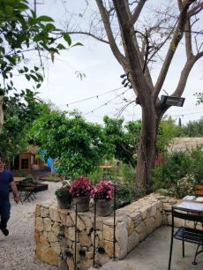 fine dining in israeli