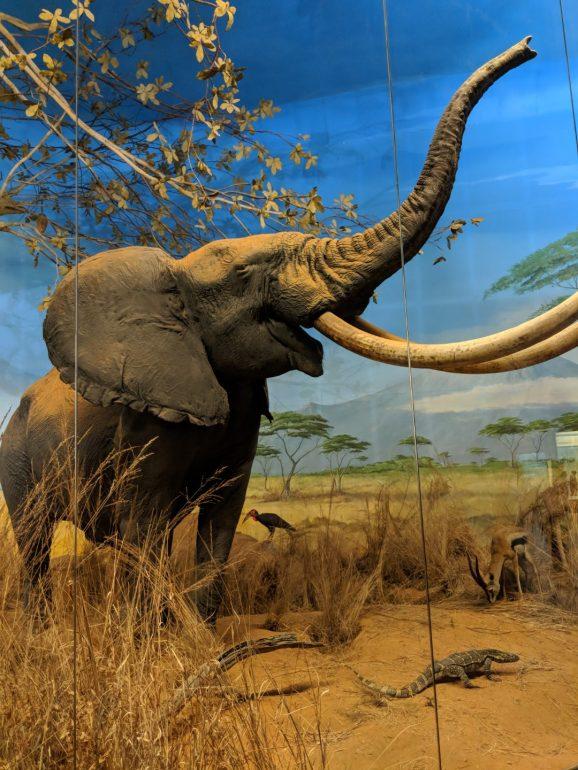 Milan natural history museum