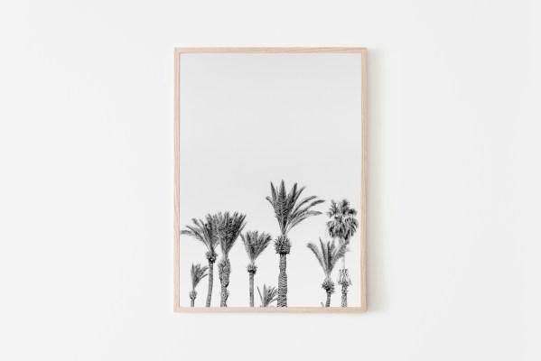 תמונה לקיר של צילום של עצי דקל בשחור-לבן להורדה. פריט דקורטיבי לקיר לעיצוב הבית. תמונה מקורית שצולמה על ידנו. ניתן להדפסה במדפסת ביתית או בבית דפוס, למסגר אותו ולתלות על הקיר :) זמין להורדה מידית.