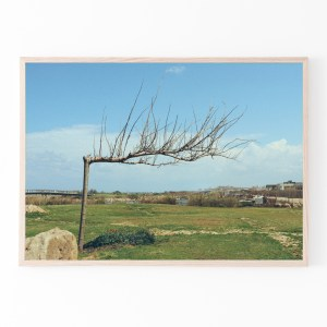 tel aviv horizontal tree print