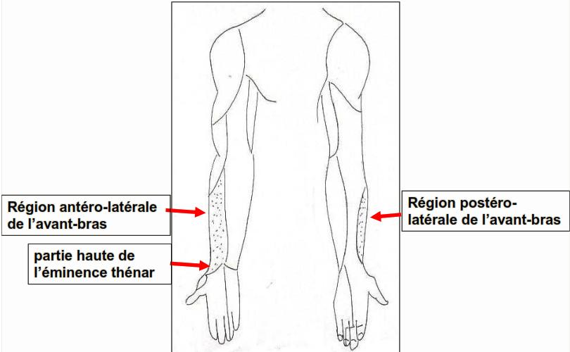 Nerf musculo cutane territoires cutanes sensitifs a l avant bras 1
