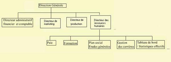 organisation de la fonction des ressources humaines