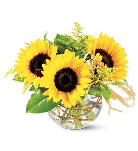 Sunflowers delivered to Tempe, AZ