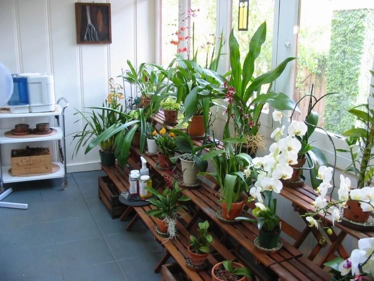 Çfarë duhet të dini për kujdesin dimëror të luleve (Foto)