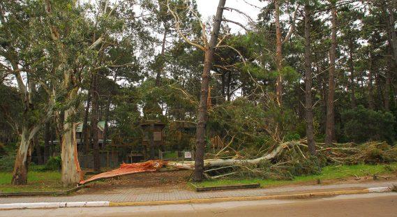 Uno de los árboles caídos en Villa Gesell durante el temporal de fines de octubre pasado.