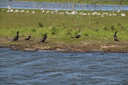 Laguna La Mansa Madariaga fauna