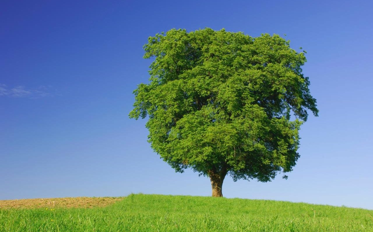 Do Trees Have Feelings Too? One Expert Says They Do