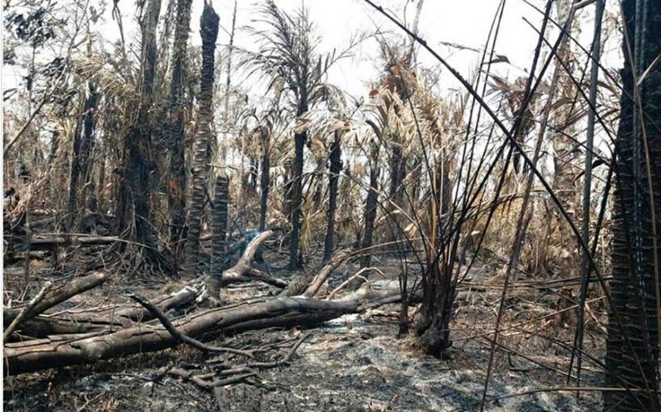 Ya no hay fuego en Reserva Indio Maíz de Nicaragua.