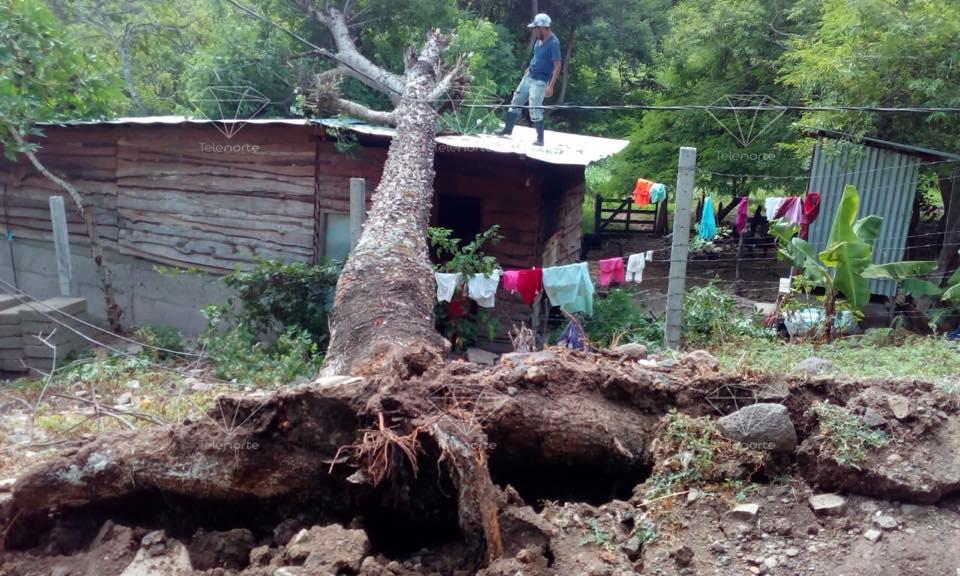 Árbol cae sobre vivienda y deja daños materiales en Isidrillo.