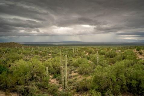 Desert Storm - Sonoran Desert Museum