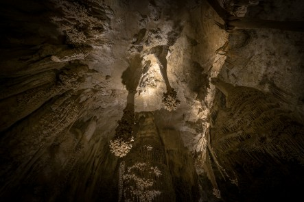 Lions Tails - Carlsburg Caverns National Park, New Mexico
