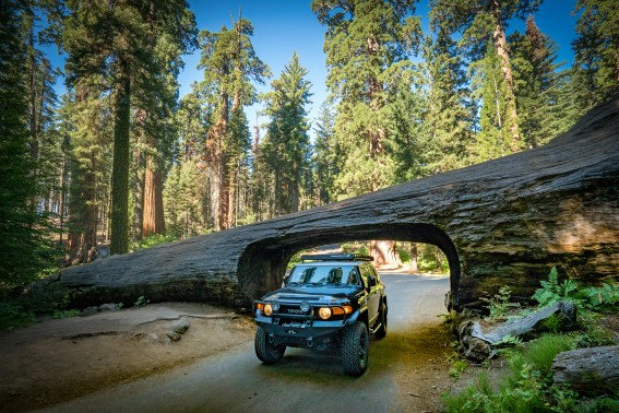 FJ Cruiser and the Tree Tunnel at Sequoia NP