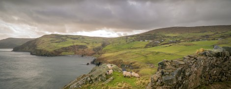 Sheep at Torr Head
